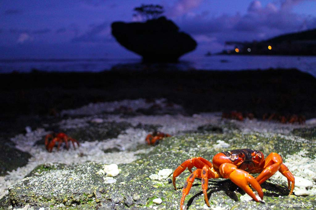 CI red crabs at dawn