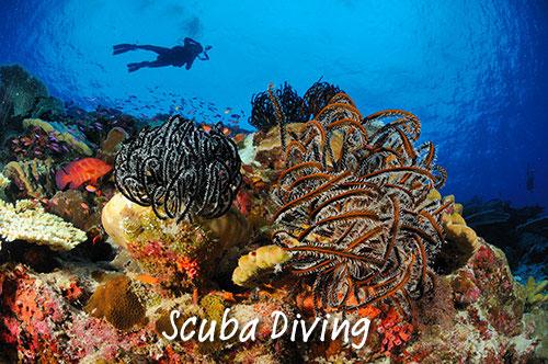 scuba diving christmas island