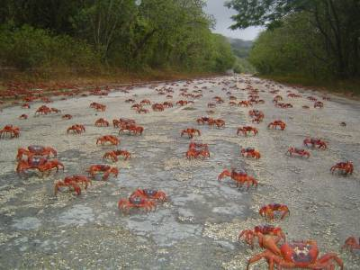 b2ap3_thumbnail_The-crabs-begin-their-journey-from-the-forest-to-the-sea.jpg
