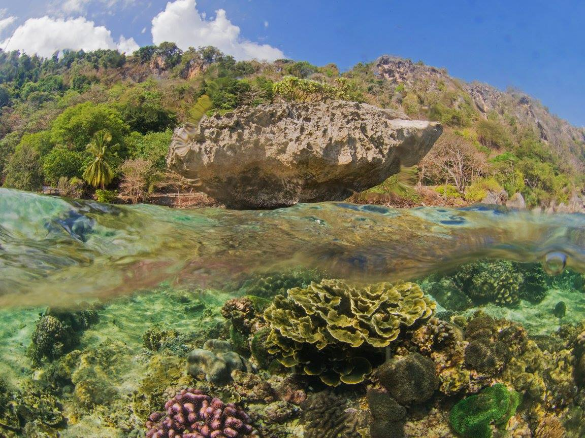 Flying Fish Cove – the world's best shore dive?