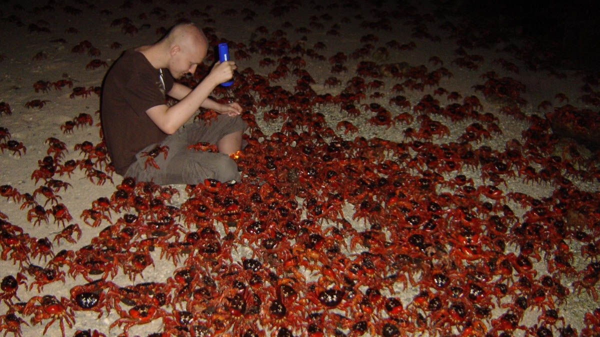 A Boy's 'Make-A-Wish' to see the Red Crabs Spawning