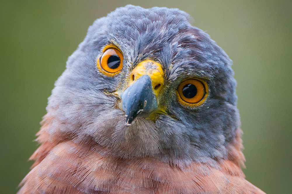 CIGoshawk---YvonneMcKenzie