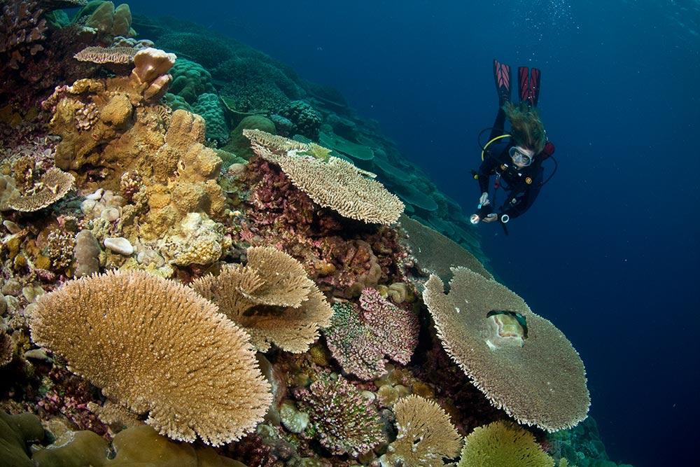 Corals---Udo-Van-Dongen