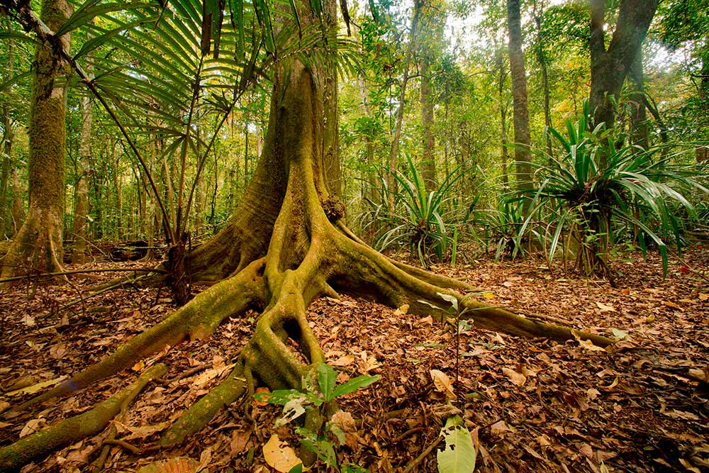 MichaelSeebeck_CI-Rainforest-Scene