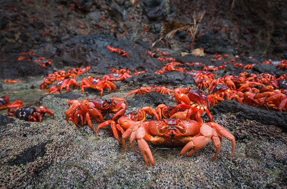 Red-crab-rocks---Kirsty-Faulkner