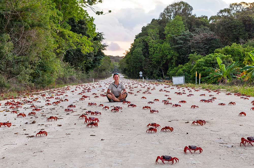 Christmas Island Red Crab Migration | Christmas Island