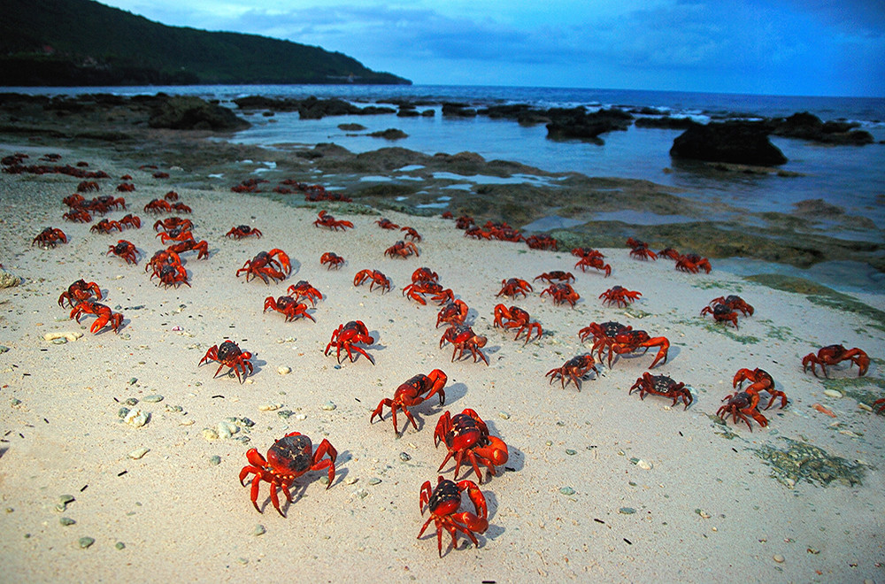 Sunrise-crabs-on-Ethel---Justin-Gilligan-2